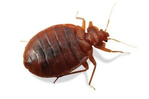 Bed Bug Control Cape Town are your local Biting Insect Experts. Contact Service Giant Cape Town for any and all insect exterminations.