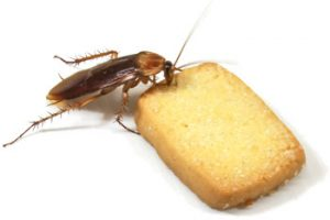 Cockroach Control Atlantis is a service by Service Giant that can stop cockroaches from eating your food.