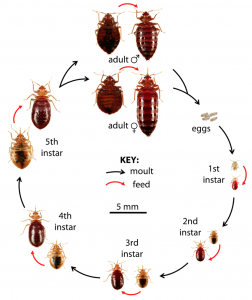 Bed Bug Control Cape Town are your local experts on all pest infestations. Contact Service Giant Cape Town fro free and no obligation quotes.